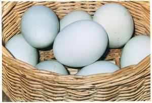 "Preferite mangiare uova Gm o eliminare i maschi ""inutili""?"