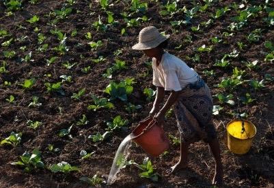 Un sistema alimentare impazzito. Riflessioni sulla Giornata Mondiale dell'Alimentazione
