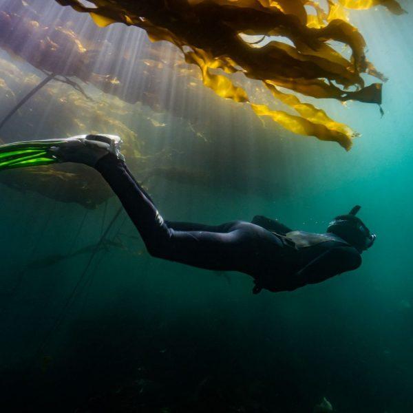 Le meraviglie delle alghe, scrigno di biodiversità