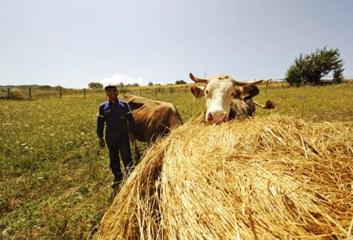 Meat the change: con la carne vacci Slow!