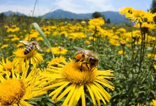 Fuori i neonicotinoidi dall'Europa. Salviamo le api