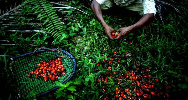 Si può sostituire l'olio di palma? - Slow Food - Buono, Pulito e Giusto.