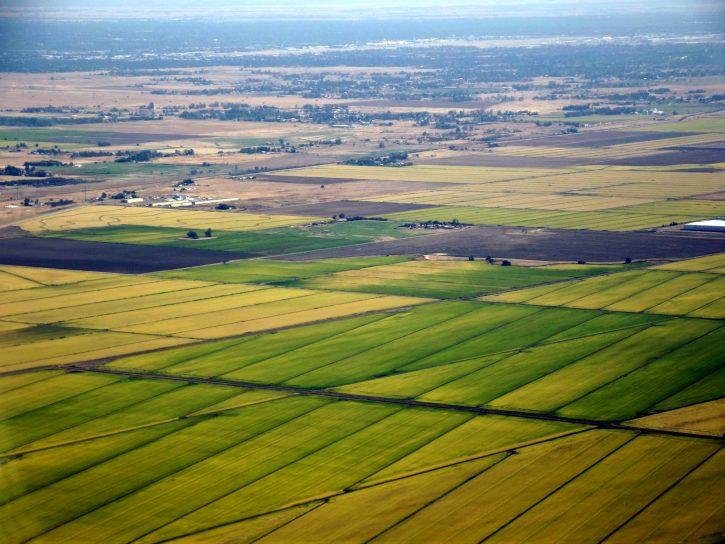Sacramento_rice_fields_campi_coltivazioni