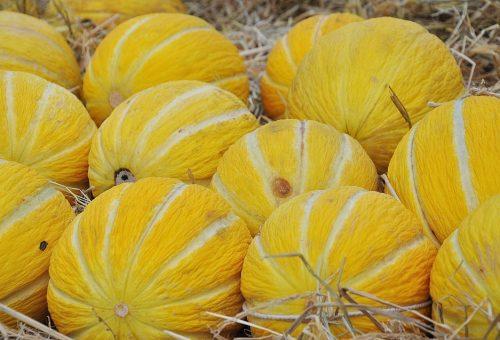 Meloni in abbondanza per salvarci dal caldo di agosto