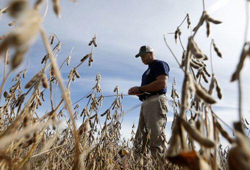 Non solo glifosato. Monsanto fa terra bruciata con il dicamba
