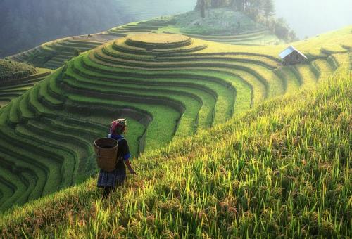 Cina, un terreno fertile per le sfide di Slow Food