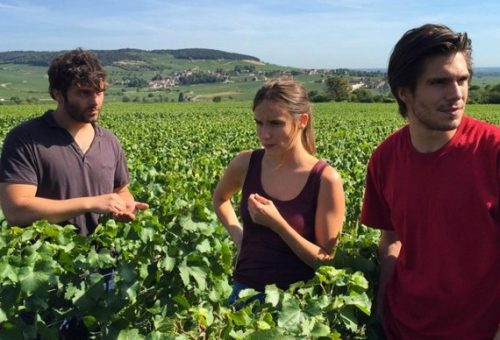 Ritorno in Borgogna. La passione del vino e la forza della famiglia nel nuovo film di Klapisch