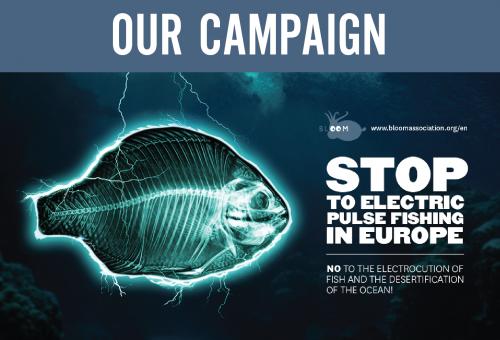 Pesca elettrica, l'Europa dice no