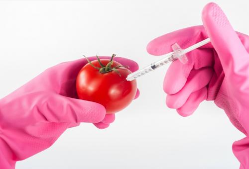 Gli Ogm fanno male? Sì, alla nostra sovranità alimentare