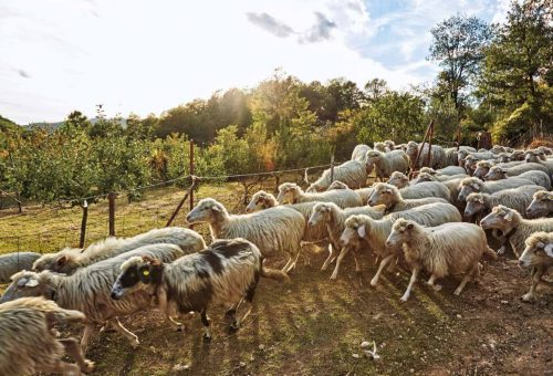 «Senza pastori non esiste la Sardegna»