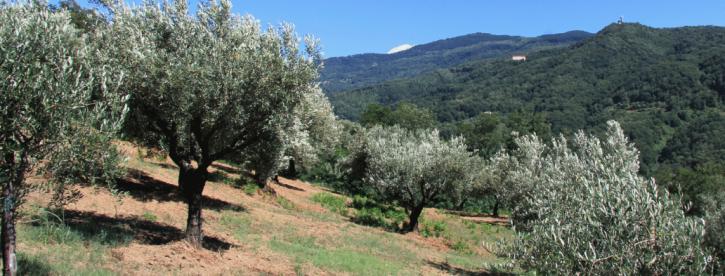 Olio Sud Italia 2021