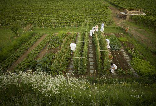 La verde rivoluzione dell'orto in città