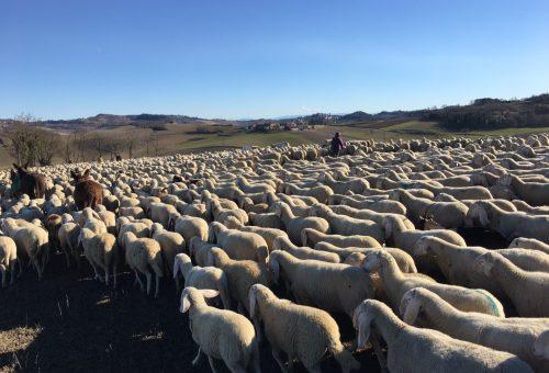 Resistenza contadina. Insieme alle pastore (femminile plurale)