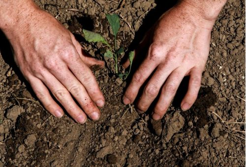 Senza suolo non c'è vita
