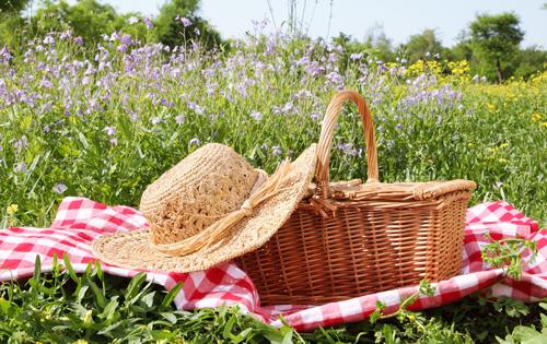 Un picnic… da manuale!