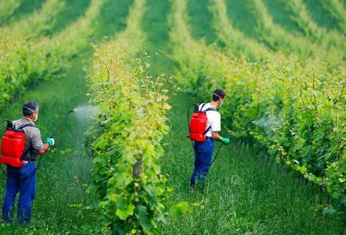 Biologico, l'agronomo Gily: «Le alternative al rame? Arriveranno. Ora aboliamo le quantità minime»
