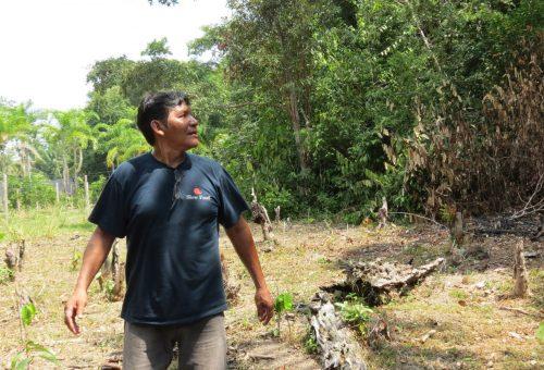 Il guaranà che salva la foresta