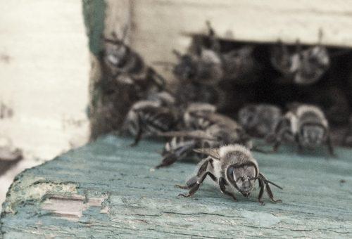 Gli insetti, nostri alleati