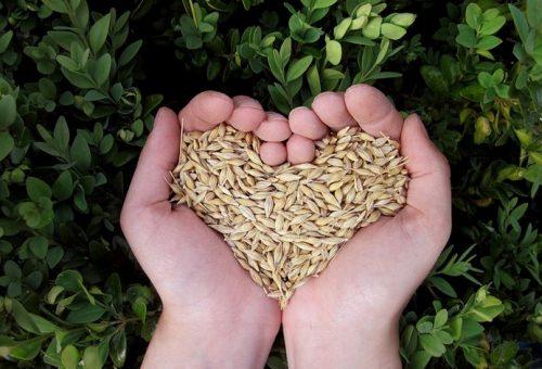Dove va l'agricoltura biologica?