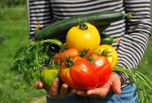Food Slow Food Buono Pulito E Giusto