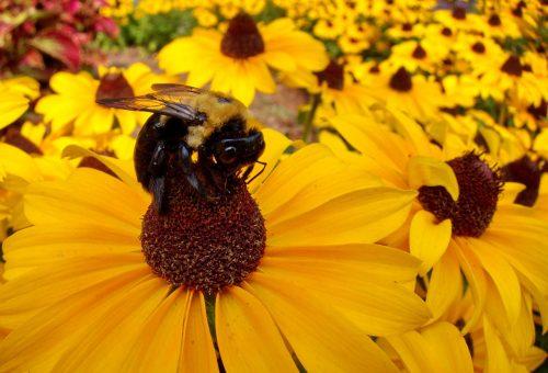 L'apocalisse delle api
