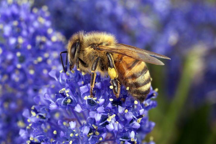 Salviamo api e agricoltori