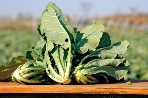 broccolo di custoza