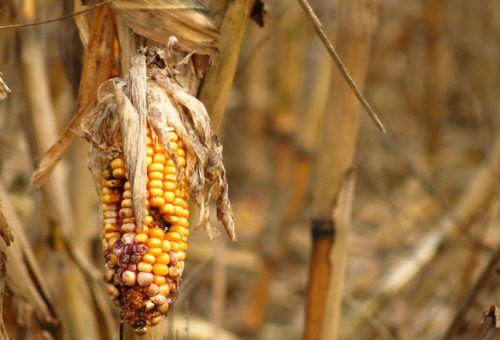 Food shocks: crescono le perdite di cibo dovute a eventi meteo e crisi geopolitiche