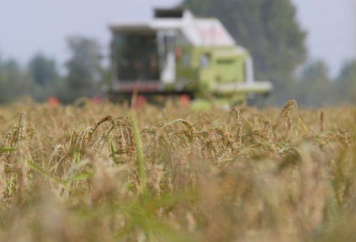 Quando i robot sostituiranno i contadini
