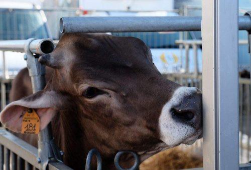 Anche durante l'emergenza Covid-19, l'Unione europea non dimentichi il benessere animale