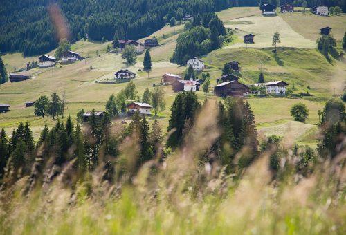 Buone notizie: il primo stop al glifosate arriva dall'Austria