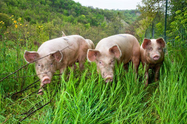 Benessere animale Europa 2020