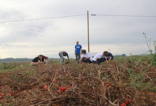 Che sapore ha quel frutto raccolto dagli schiavi? Una #dietacaporalatofree, la campagna di Slow Food Youth Network