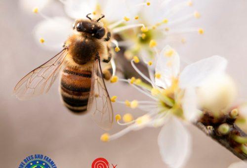 Salvare le api vuol dire salvare il cibo