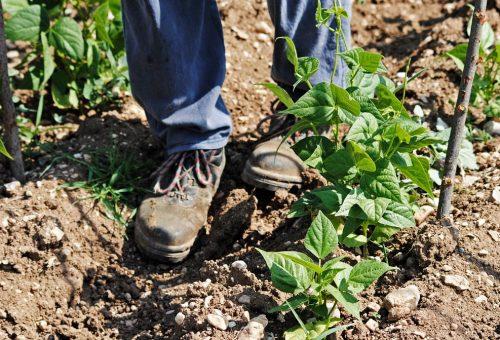 La regolarizzazione dei braccianti agricoli è un primo passo verso la legalità della filiera