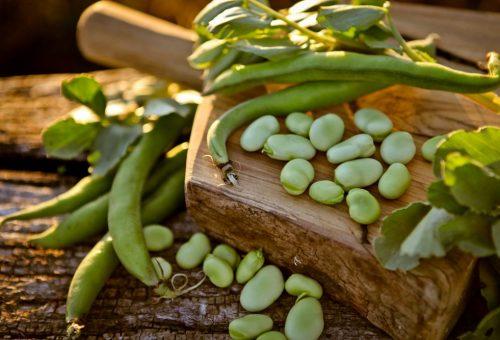 Il freddo ha risparmiato le colture e lascia il posto alla primavera: è tempo di fave!