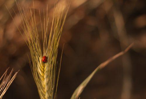 Negoziati Politica agricola comune (Pac) 2020: è ora di dire la nostra