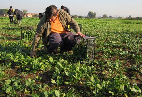 Sistemi di patrimonio agricolo globale (Giahs). L'agricoltura e il futuro del pianeta