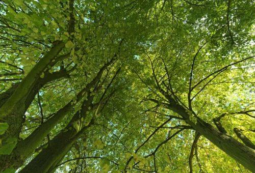 Nasce AlberItalia il Comitato per garantire la messa a dimora di 60 milioni di alberi