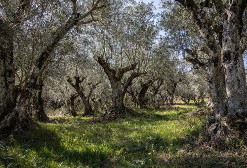 Terre di Molinara, un esempio buono, pulito e giusto