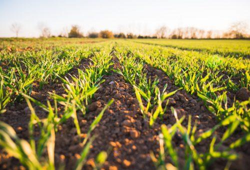 Ne perdiamo 2 metri quadri al secondo: il suolo ha bisogno di te