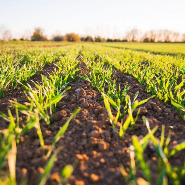 Compagnia del suolo: al via la campagna per la verifica della chimica nei terreni agricoli