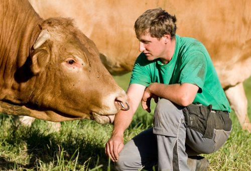 Covid-19 e macelli: quando il benessere animale fa la differenza anche per l'uomo