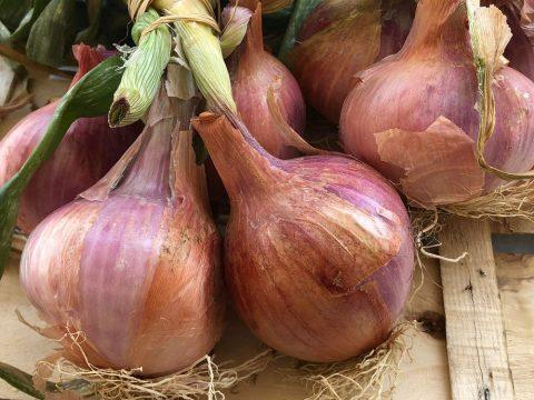 Cipolla Airola, nuovo Presidio Slow Food