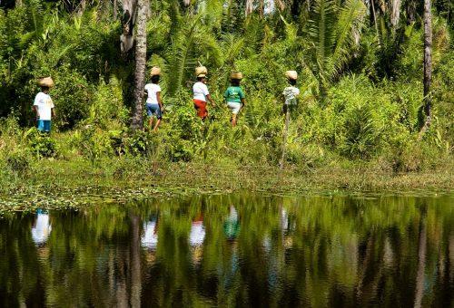 Il Cerrado del Brasile è in pericolo e grida aiuto