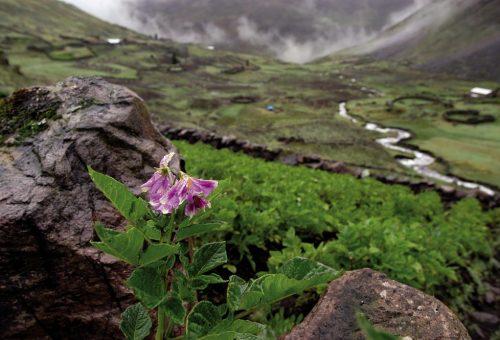 Biodiversità, ultima chiamata: le 8 misure da adottare. Ora.