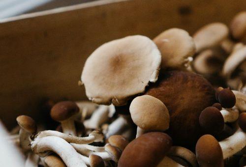 É il momento dei funghi?