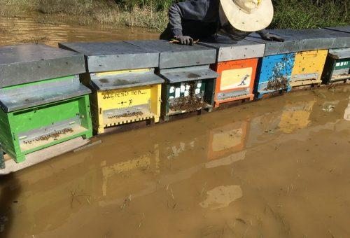 Allarme alluvione: api e apicoltori in grave pericolo
