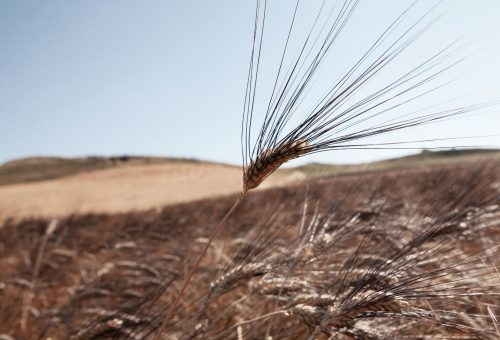 Il biologico secondo Alce Nero: buono, rispettoso del lavoro e che fa bene al pianeta
