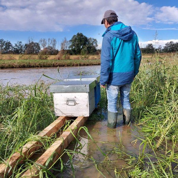 Allarme alluvione: api e apicoltori in ginocchio